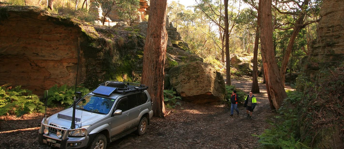 Lithgows northern forests NSW