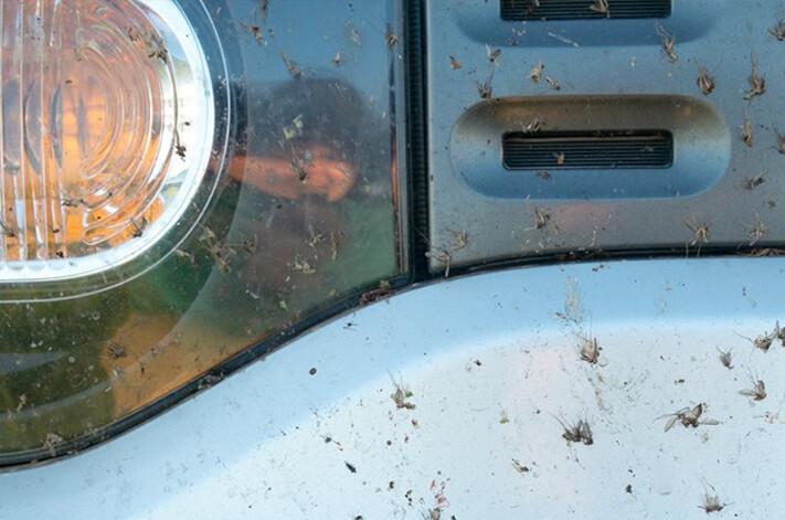 Bugs On Car Grille Jpg