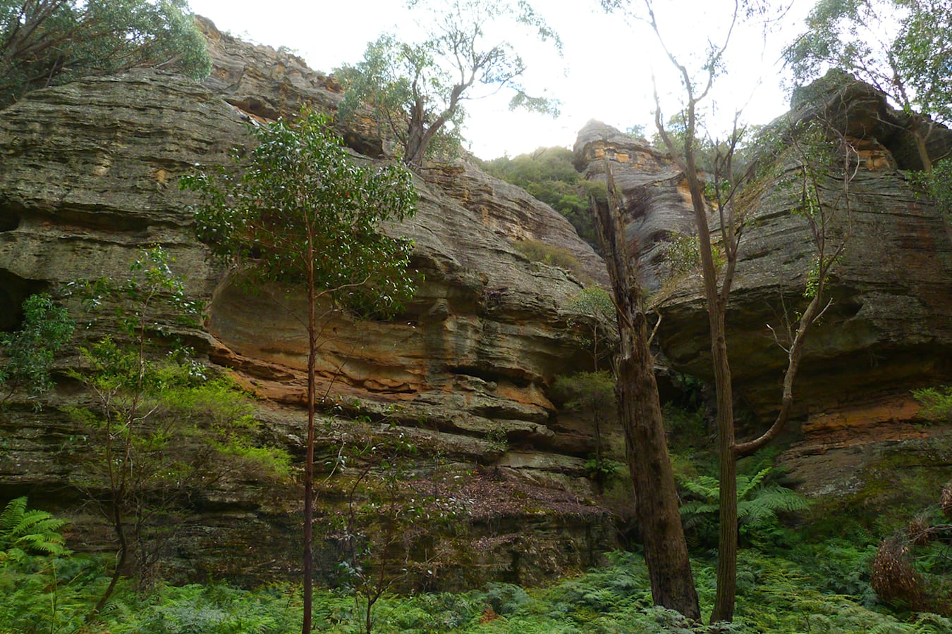 Lithgows northern forests NSW rocks