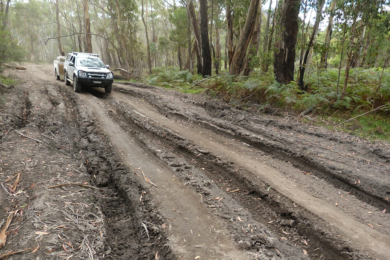 Lithgows northern forests NSW track