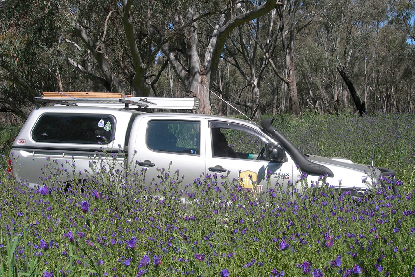 Toyota Hilux field of Patersons Curse