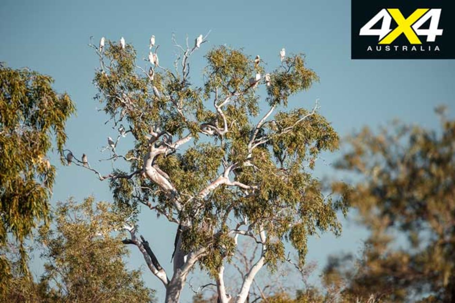 Hay River Track NT Birds Jpg