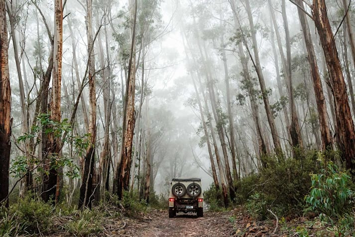 Exploring NSW South-East forests part 1