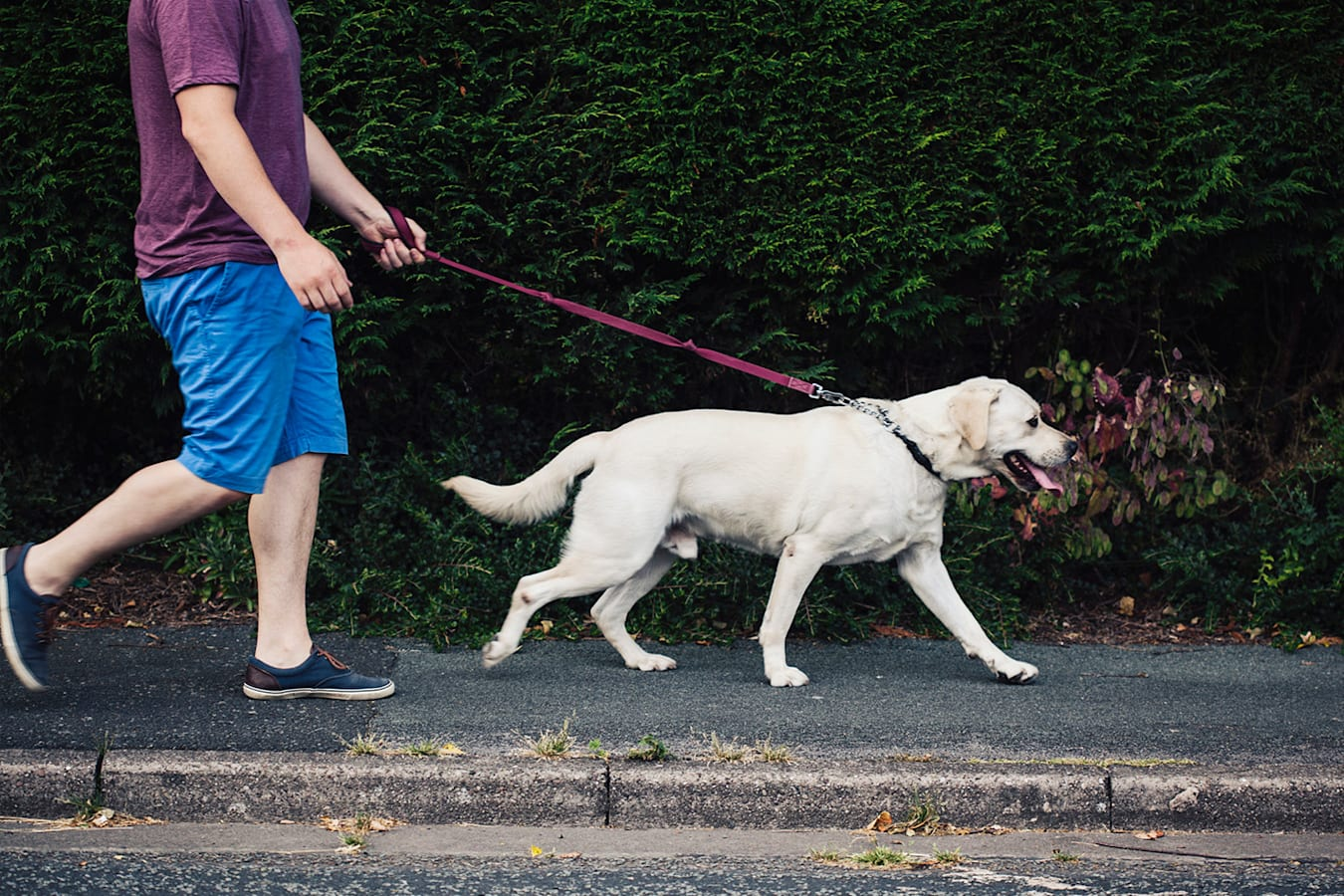 Pedestrian Dog Jpg
