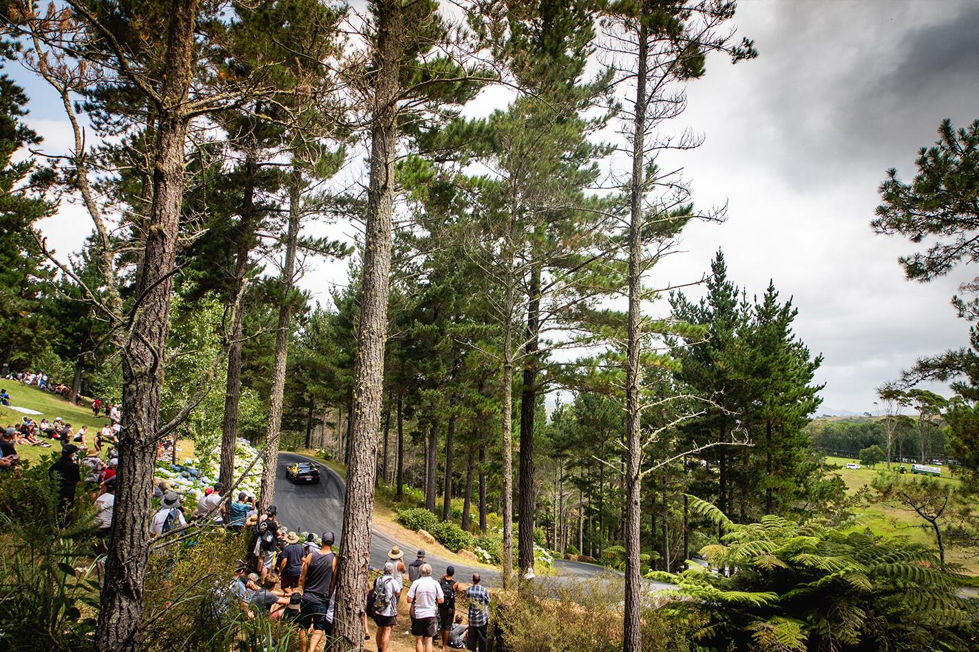 Leadfoot Fest Tree Jpg