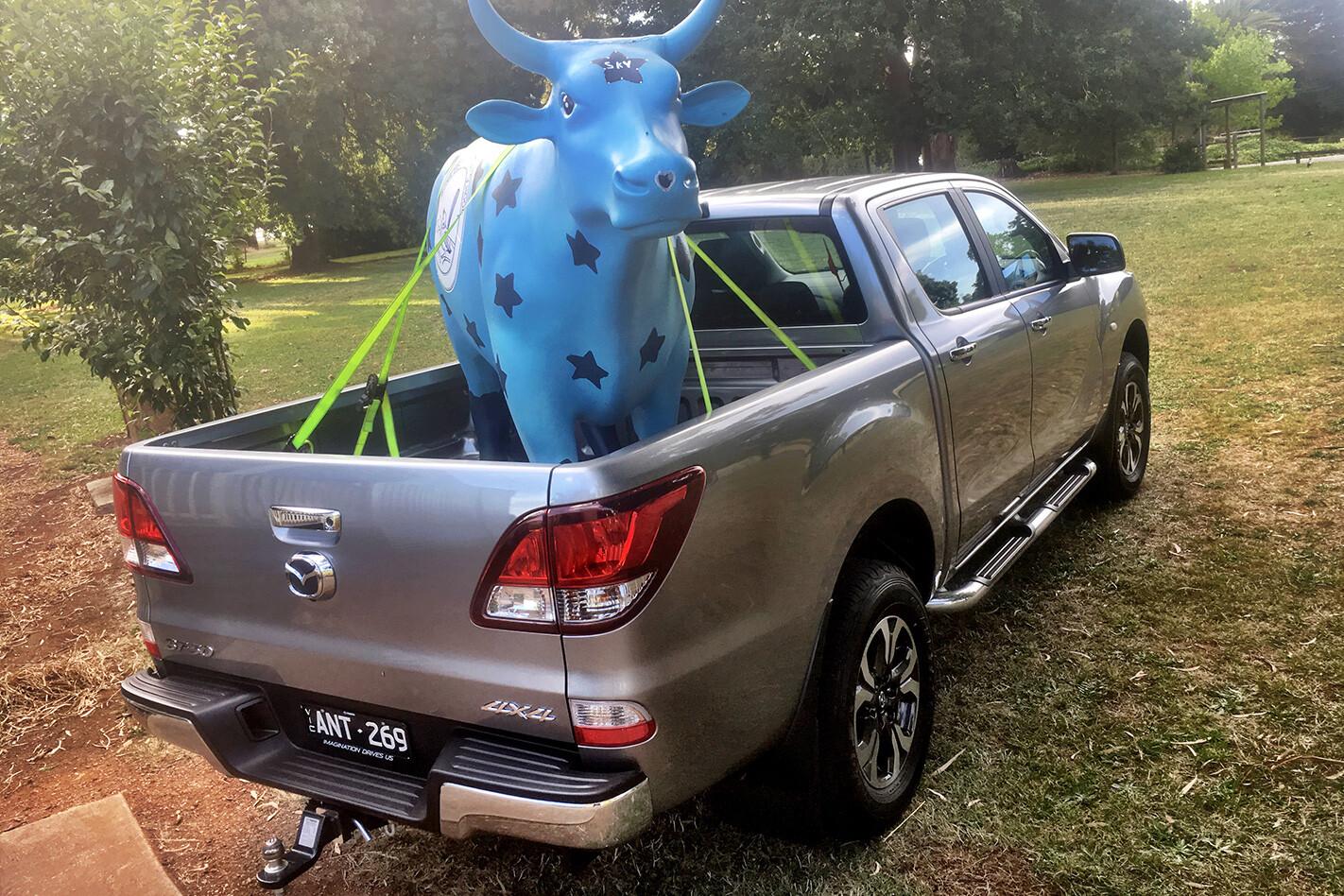 Mazda Bt 50 Holiday Report Cow Jpg